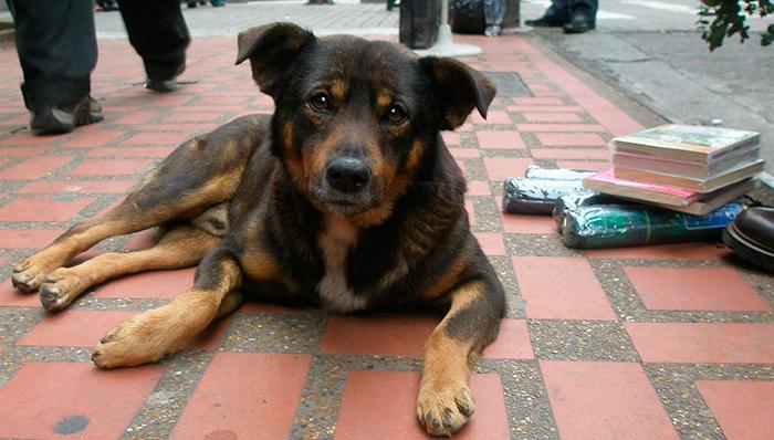 Ajuda animal - Solidariedade com animais 6