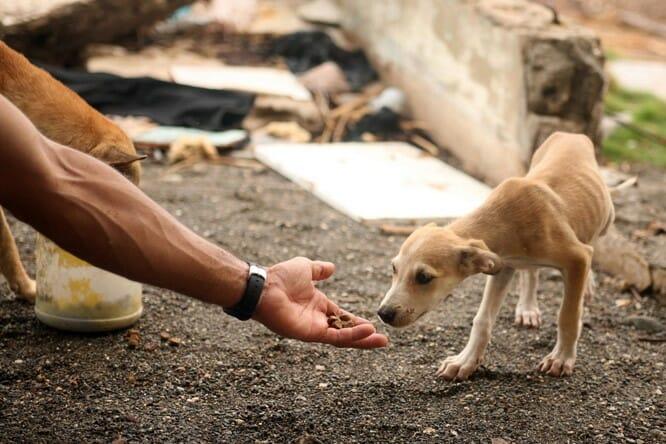 Proteção animal - 5 maneiras de ajudar uma organização 1